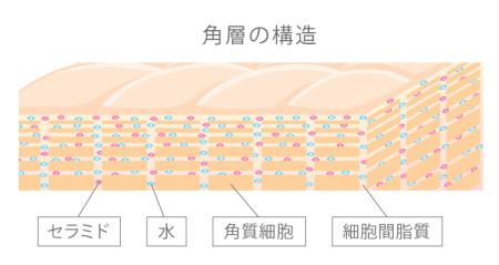 角層の構造
