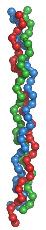 コラーゲンの3重らせん構造-Wikipediaより
